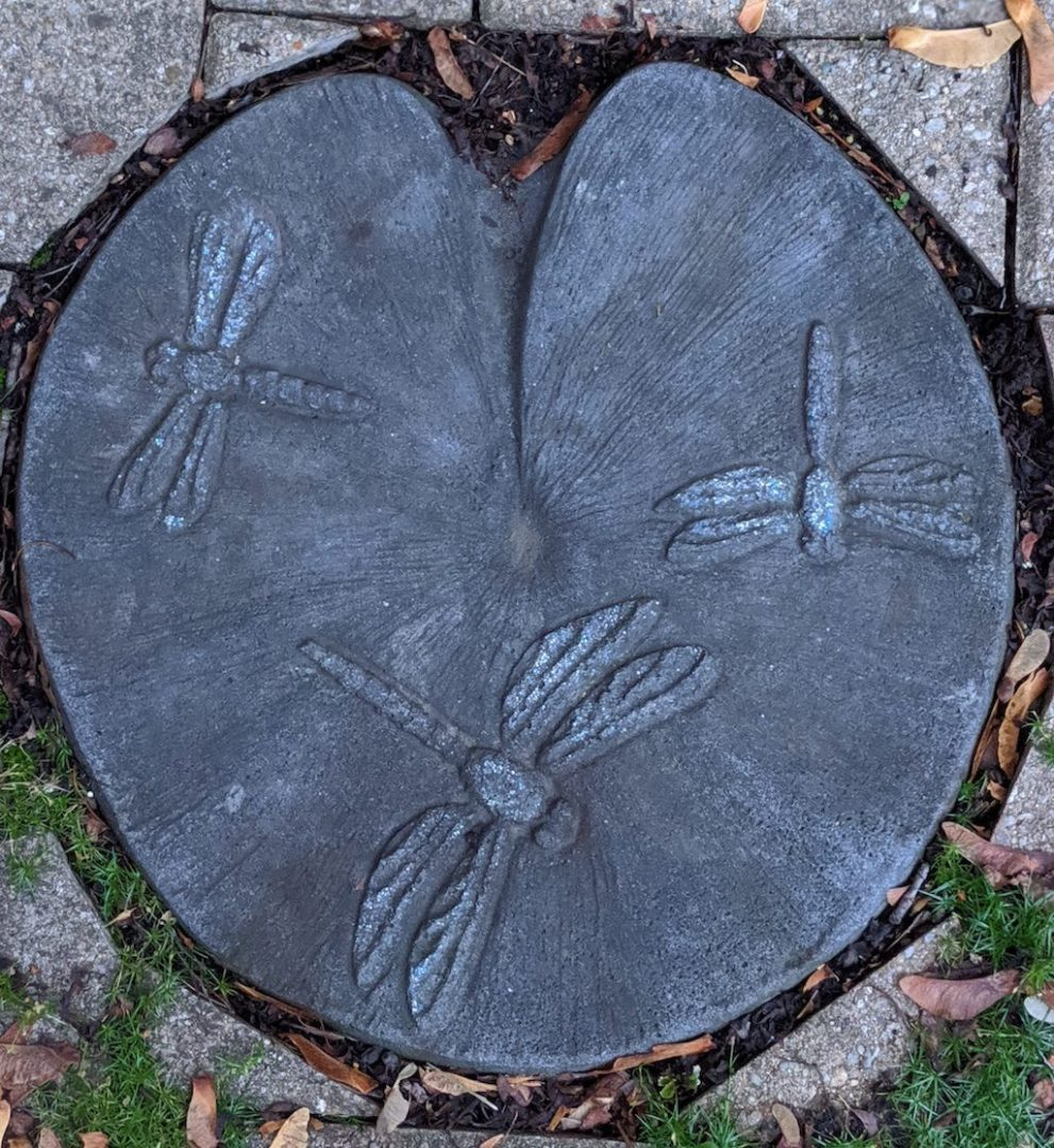 dragonfly-stepping-stone