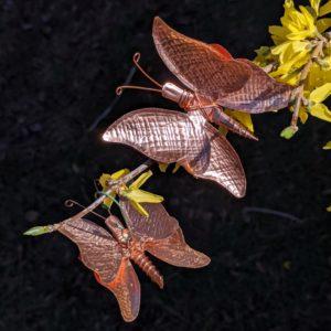 flutter-fanny-forsythia