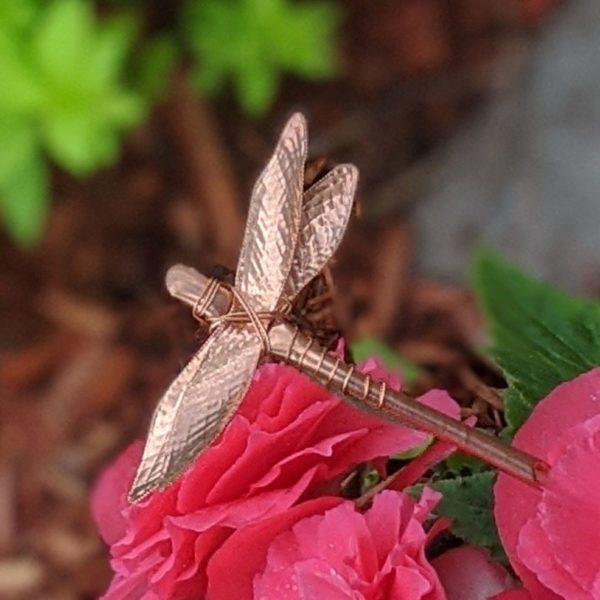 darby-begonia